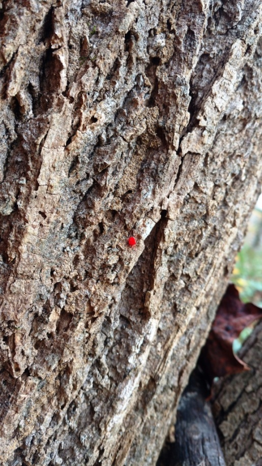 mite on tree trunk