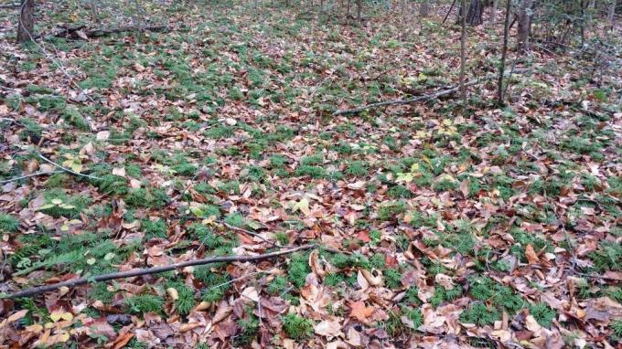running cedar 2