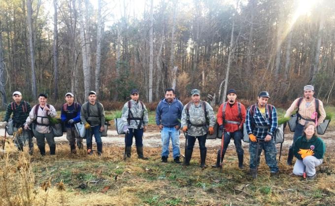 longleaf planting crew