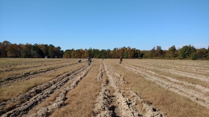 open field planting