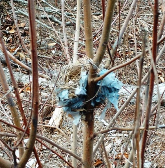 bird nest w plastic