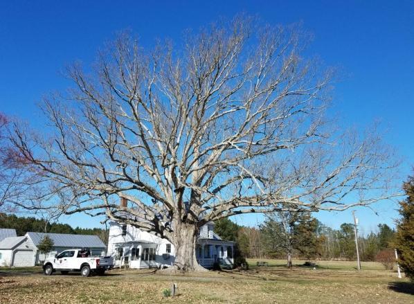 oak and house