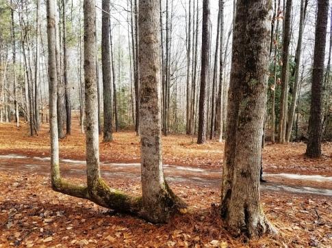 Rest Stop Tree