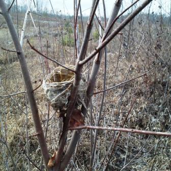songbird nest 1 - Copy