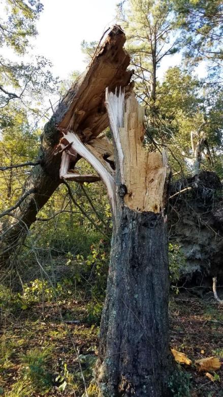 tree1